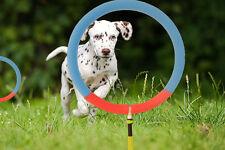 Dog Agility Training Hoop Jump Indoor Outdoor Home Professional Equipment. M/L