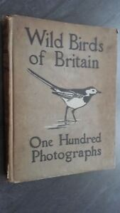 Wild-Birds-Of-Britain-F-B-Kirkman-London-T-C-amp-e-c-Jack-102-Fotos-ABE