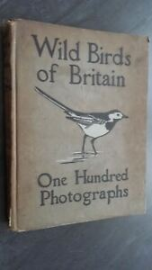 Wild-Birds-Of-Britain-F-B-Kirkman-London-T-C-amp-e-c-Jack-102-Fotos-ABE