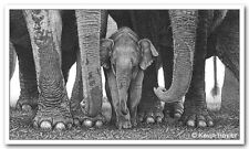 Baby elephant print picture wildlife animal wall sketch jumbo art pencil drawing
