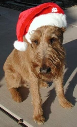 CHRISTMAS SANTA DOG HAT