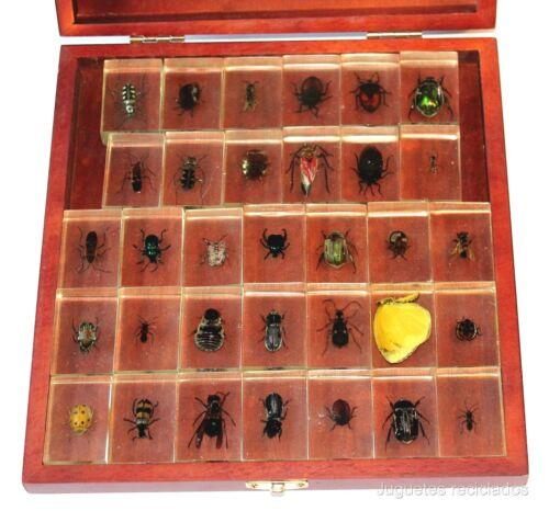 Colección 33 Insectos del Mundo bichos auténticos disecados