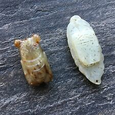 2 Chinese antique Jade Cicadas charms