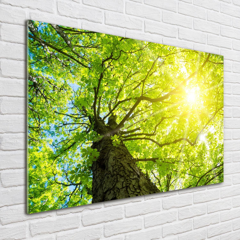 Acrylglas-Bild Wandbilder Druck 100x70 Deko Blaumen & Pflanzen Kastanienbaum