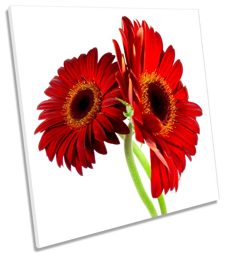 Gerbera Floral Flower SQUARE BOX FRAMED CANVAS Kunst Bild