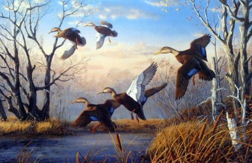 """Terry Doughty /""""That Special Place/"""" Duck Art Print 24/"""" x 15.75/"""" SN Artists Proof"""