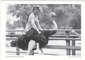 Postcard-034-Cawston-039-s-Ostrich-Farm-034-S-Pasadena-Los-Angeles-California-49