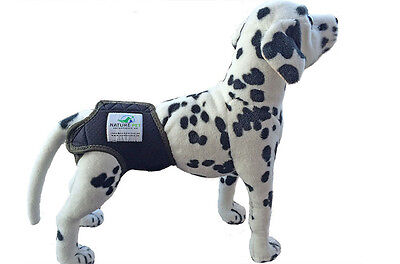 Incontinence Pants Protective Pants For Dogs