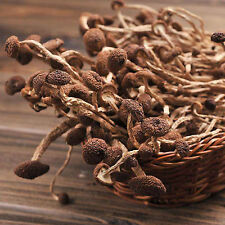 Dried Wild Magic Mushrooms Agrocybe Cylindracea  500g Natural Healthy Edible