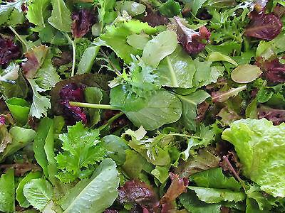 MESCLUN  'Mild mix' ORGANIC'  200 seeds vegetable garden salad