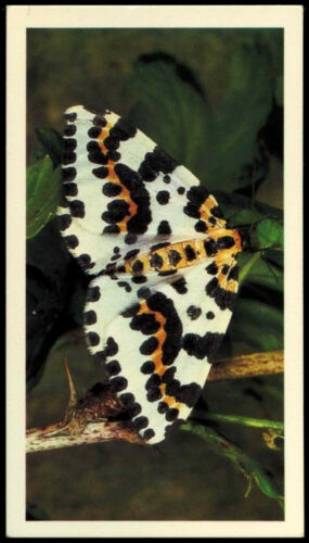 Magpie Moth #5 Britains Wayside Wildlife Card C300