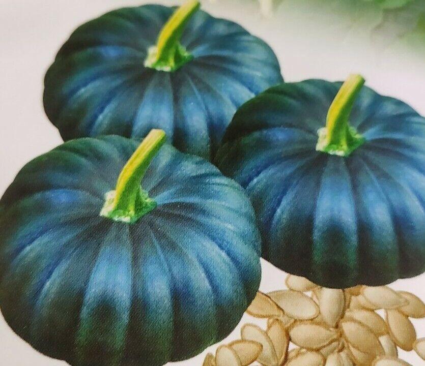 2 packet Asian/ Bangladeshi Tasty pumpkins Vegetable F1 Hybrid Seeds 💯% Grows