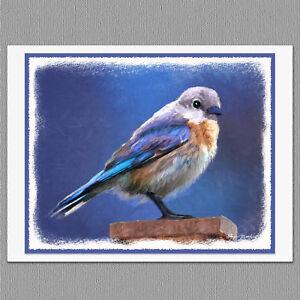 6 female bluebird wild bird blank art note greeting cards ebay image is loading 6 female bluebird wild bird blank art note m4hsunfo