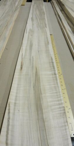 "Spalted Ambrosia Wormy Maple Figured Fiddleback wood veneer 9/"" x 126/"" no backing"