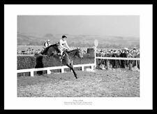 Arkle 1964 Cheltenham Gold Cup Horse Racing Photo Memorabilia (759)