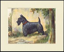 SCOTTISH TERRIER STANDING DOG LOVELY PRINT MOUNTED READY TO FRAME