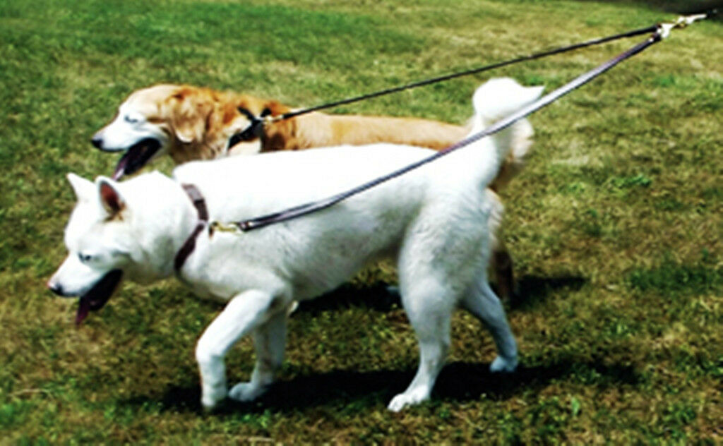 Auburn Leathercrafters QUALITY  2 Dog Walker  Leather or Web Dog Leads Couplers