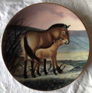 Collectors-display-plate-Przewalski-039-s-Horse-by-Will-Nelson-WJ-George-china