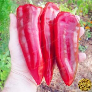 100-Pcs-Graines-Piment-Bonsai-plantes-potageres-Paprika-maison-jardin-fleurs-New-U-X