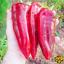 100-Pcs-Graines-Piment-Bonsai-plantes-potageres-Paprika-maison-jardin-fleurs-New-U-X miniature 1