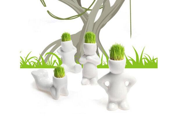 4 Shape Novel Bonsai Grass Doll Hair White Lazy Man Plant Garden DIY Mini New