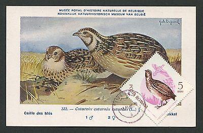 Angemessen Romania Mk 1962 Fauna Wachtel Quail VÖgel Maximumkarte Maximum Card Mc Cm D2769 Verpackung Der Nominierten Marke Briefmarken