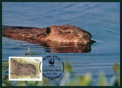 Belarus Mk 1995 Fauna Tiere Animals Biber Beaver Castor Maximumkarte Mc Cm En13