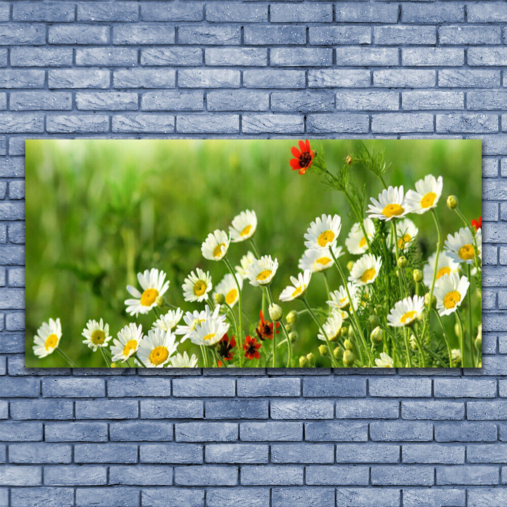 Glass print Wall art 140x70 Image Picture Daisy Nature