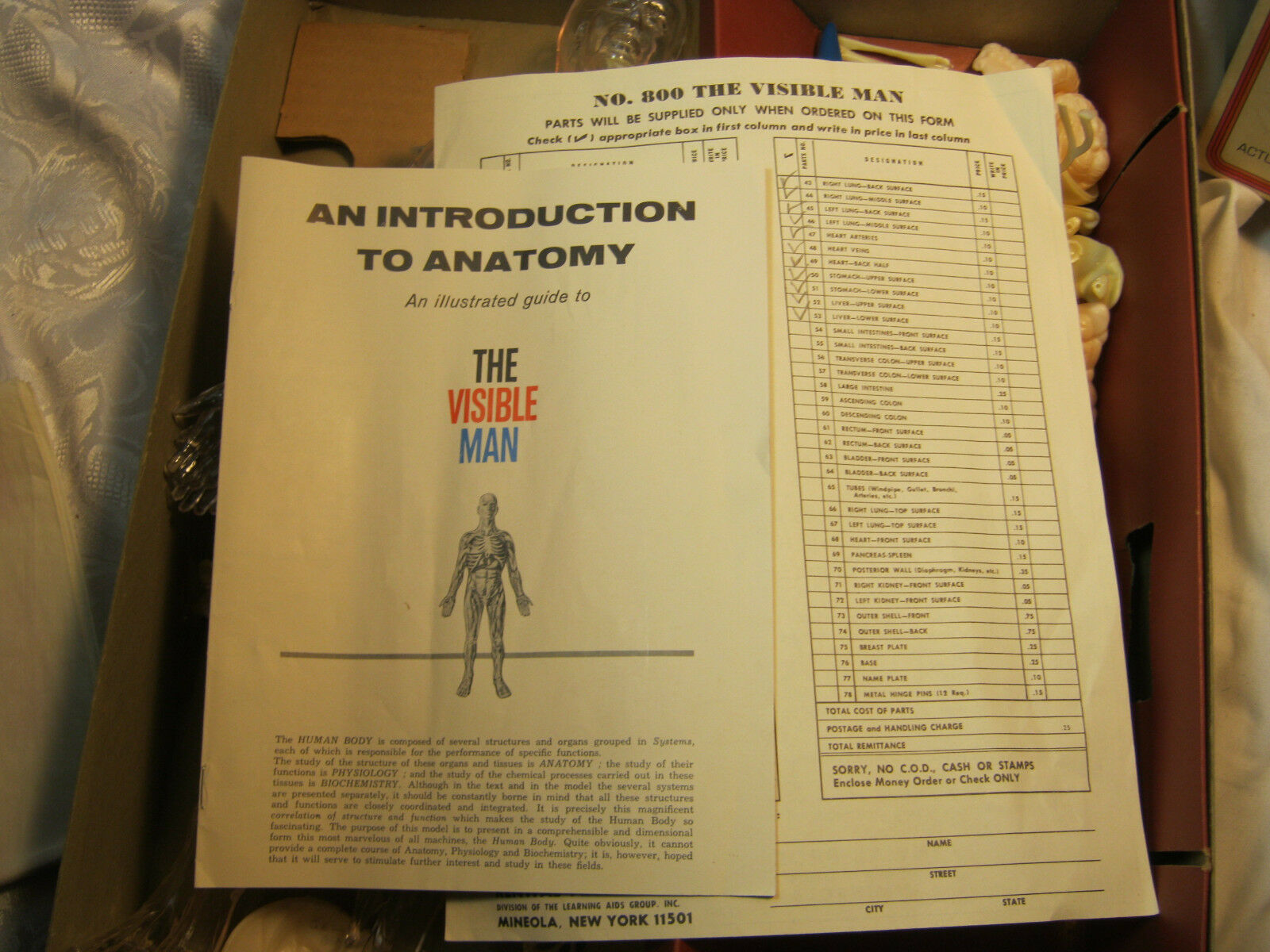 Renwal The Visible Man Educational assembly kit original vintage ...