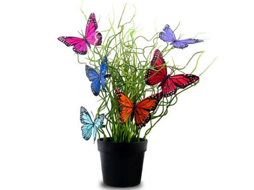Dekoklammern Schmetterling aus echt Federn Dekoclips 6 Farbe zur Auswahl