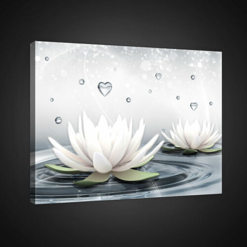 CANVAS Wandbild Leinwandbild Bild Blumen Lilie Wasser Herz Tropfen  13N2523O1