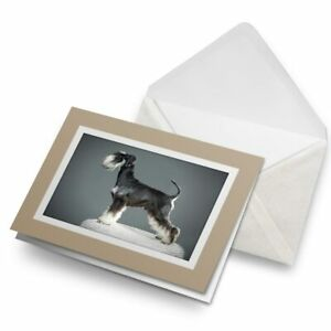 Greetings-Card-Biege-Miniature-Schnauzer-Puppy-Dog-21888