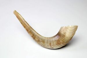 Natural-Ram-Shofar-Horn-10-034-11-034-Judaica-Israel-Made-Kosher