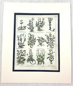 1810-Antique-Botanical-Print-Grape-Vine-Violets-Valerian-Plants-Hand-Coloured