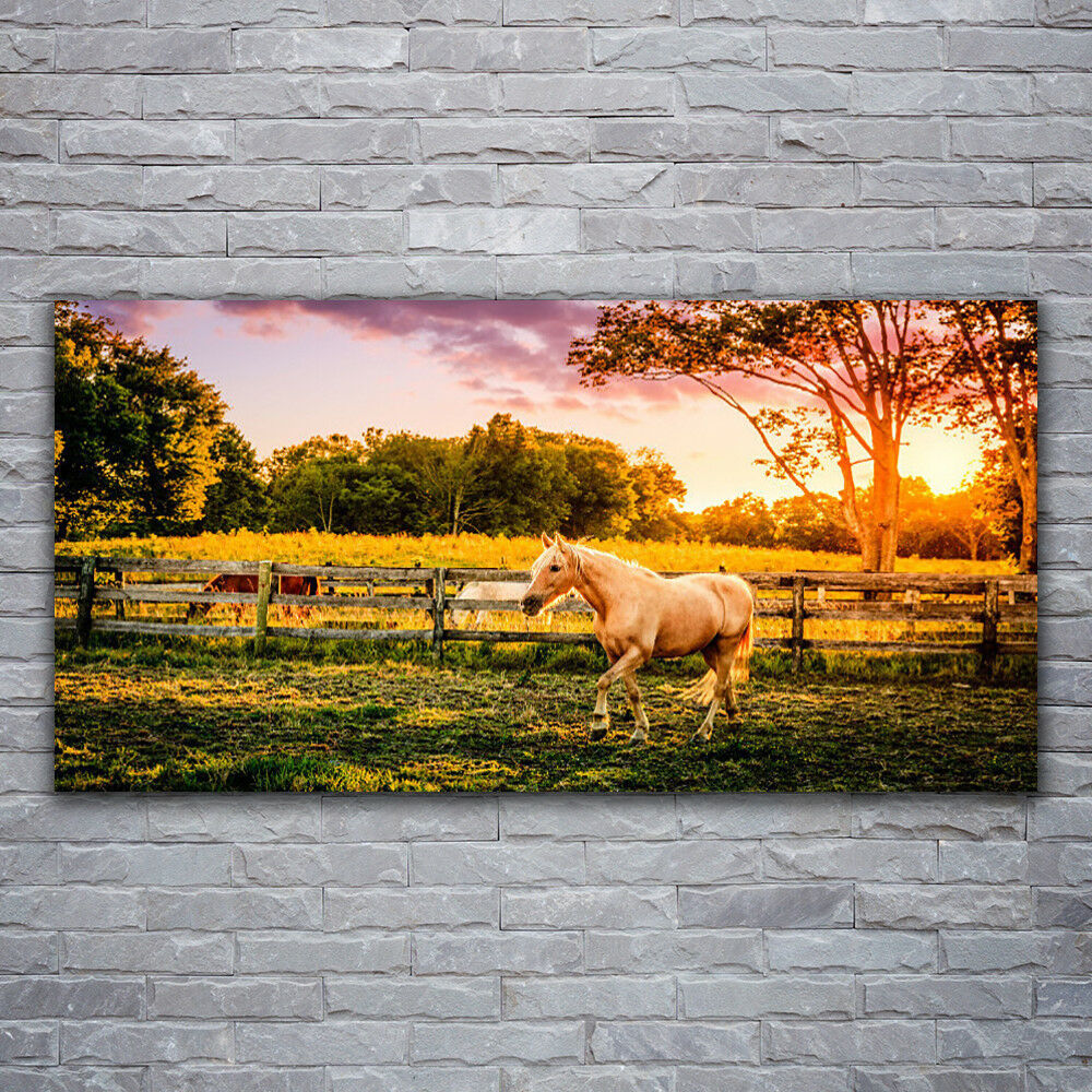 Wall pictures Glass Pictures Print on Glass 120x60 Horse Meadow Animals
