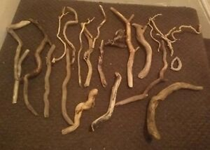 10-Rare-Random-Driftwood-Pieces-curly-interesting