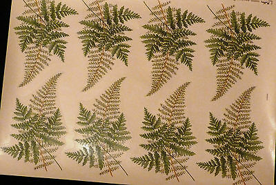 CERAMIC DECALS  FERNS 646214 8 ON A SHEET RIGHT PRICE