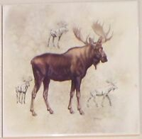 Moose Ceramic Tile 6.00 X 6.00 Kiln Fired Back Splash Tile
