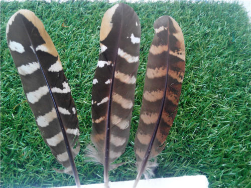 500 PCS Beautiful pheasant tail /& peacock Feathers 4-20cm //2-8 inch Diy carnival