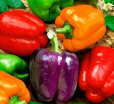 Seeds Sweet Pepper Rainbow Bell Red Mix Organic Heirloom Russian Ukraine