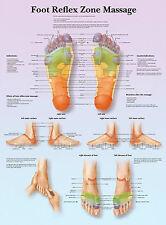 A3 POSTER medico-Massaggio riflesso zona del piede (libro di testo ANATOMIA foto)