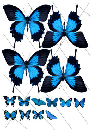 BUT-CUT-SAVE Transparent Butterfly Sheets Mixed Ulysses