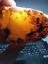 BIG-AMBER-YOLK-NUGGET-300-gr-Baltic-NATURAL-SKIN thumbnail 4