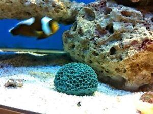 Artificial coral brain aquarium marina fish tank for Artificial coral reef aquarium decoration uk