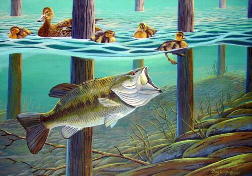 Largemouth Bass fishing 11 x 14 Print by Doug Walpus Ducks Calm Before the Storm