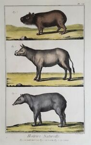 BABIRUSSA-CAPIBARA-TAPIRO-TAPIR-DEER-PIG-DIDEROT-ANTONIO-BARATTI-1770-CABIAI