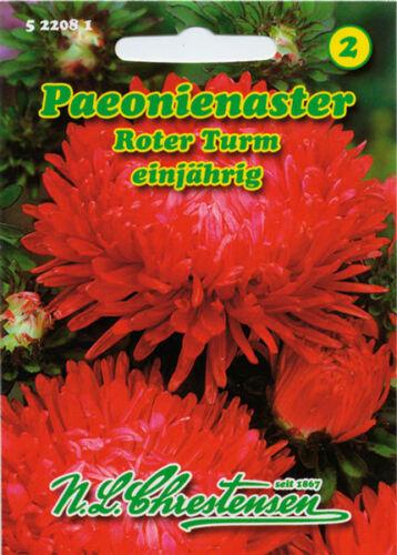 Paeonienaster,roter Turm,Saatgut,Callistephus chinensis,Blume,Chrestensen,NLC 2
