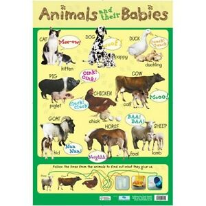 Animals-and-their-Babies-Educational-Poster-0085