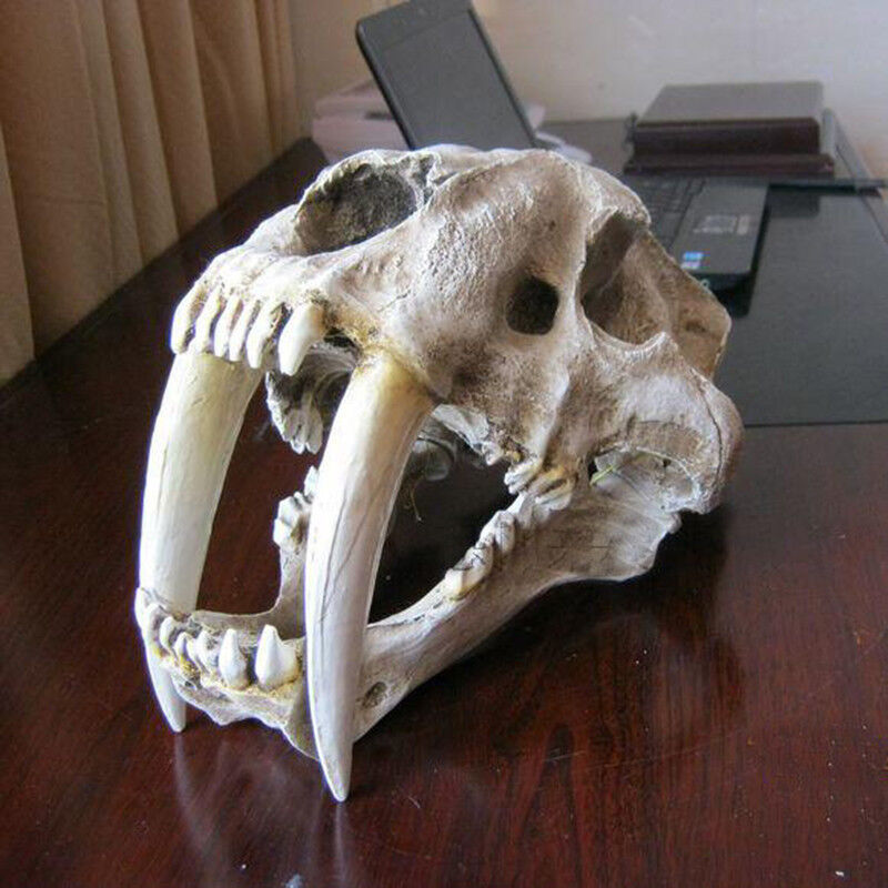 1 1 Saber-Toothed Tiger Resin Skull Statue Figurine Head Model Home Decor
