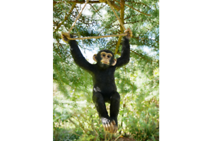 Climbing-Monkey-Garden-ornament-Monkey-hanging-tree-statue